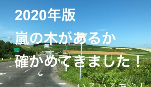 【2020年版】北海道美瑛の嵐の木はまだある?現地に行ってきました!